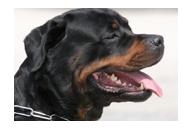 Solución prediseñada: Registro de Animales Peligrosos